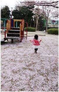 桜色の絨毯の思い出 - 日々楽しく ♪mon bonheur