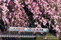 花のれん - *花音の調べ*