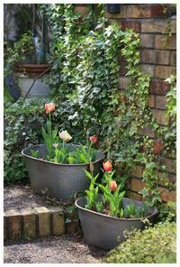 春の訪れ - natu     * 素敵なナチュラルガーデンから~*     福岡で庭造り、外構工事(エクステリア)をしてます