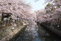 桜 - Sandwich