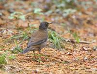 近くの公園を探鳥、 - ぶらり探鳥