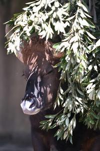大きな枝と大きなイチゴ - bonsoir