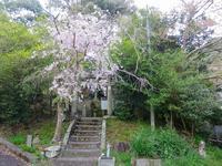 Kii route-1 From Yamanaka-dani to Yamagichi Oji / 山中渓~山口王子へ - 熊野古道 歩きませんか? / Let's walk Kumano Kodo