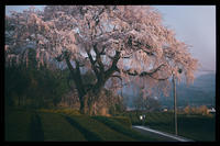 池田山の一本桜 - びっと飴
