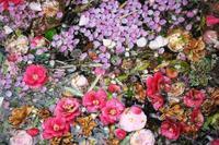 今朝の桜⑩ - グル的日乗