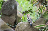至近距離での出合い - 趣味の野鳥撮影