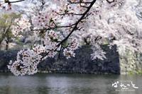 ああ、念願の『桜吹雪』 - 『フォトスタジオぱれっと』の必ずしも写真に関係あるとは限らない話