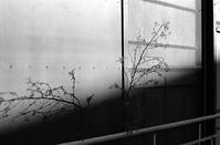 【21st Century snapshot man】広尾アトムレンズと抽象化する思考2018 1/4 - 写像的空間