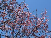 次々に咲きだしました♪ - 風路のこぶちさわ日記