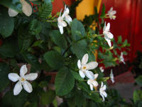 Canon Powershot S30 is excellent in closeup shooting - SONGS