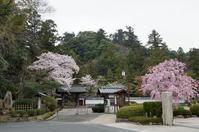 蒙光山(むこうさん)月照寺 - 清治の花便り