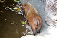 mini花筏 - 動物園へ行こう