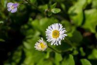 キバナカタクリが咲きました - あだっちゃんの花鳥風月
