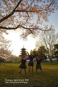 桜の想い出! - 気ままな Digital PhotoⅡ