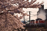 桜とDD51 - HIROのフォトアルバム