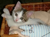 誕生日 - ドン・小太郎・コルリオーネ、愛と猫缶の日々
