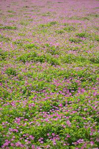 春の花続々 - Change The World