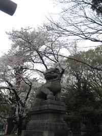 靖国神社の桜 - 歴史と、自然と、芸術と