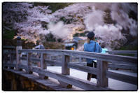 彦根城-4 - Hare's Photolog