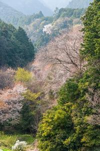 名残の山麓線 - toshi の ならはまほろば