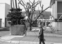 モノクロの桜木と富士モノクロフィルムの販売終了 - 照片画廊