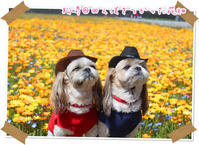 2018年3月24日松崎@田んぼを使った花畑 - 週末は、愛犬モモと永吉とお出かけ!Kimi's Eye