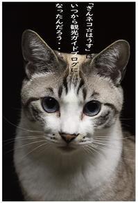ガイドブログ - ぎんネコ☆はうす