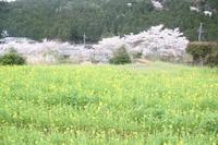 京都 大原観光 三千院 - 石のコトバ
