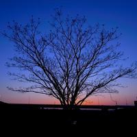 河川敷の木 - 夕景のhunter