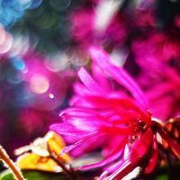 """p859 """" 春 """" 松の川緑道 2018年4月8日 - 侘び寂び"""
