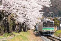 4月1日上長瀞の桜並木 - 鉄道模型の小部屋