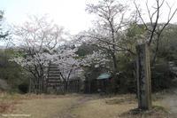 桜・躑躅・菫花散歩 - 虫籠物語