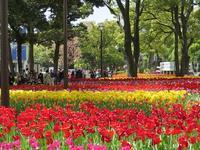 春の花 in 横浜 - AREKORE