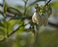 今日の花たち - 風の吹くまま
