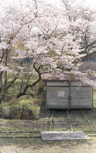 鐵路脇ノ桜花 - またいつか旅に出る