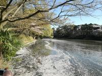 氷川神社って日本に何番目に多いのだろう? - チェンマイUpdate