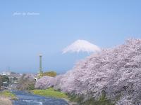 龍巌淵の桜〜静岡県富士市〜 - Photographie de la couleur