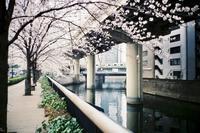 ✿神田川 - ✿happiness✿