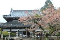 苔むした幹が支える桃色の 雨に打たれて しばし佇む @温泉禅寺 #有馬温泉 - Entrepreneurshipを探る旅