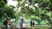 私のおすすめ2018年(平成30年)桃狩り農園直売所「ファミリー農場さの」一宮御坂で時間無制限の食べ放題をしよう! - 食べるものはなるべく自家栽培~裏の畑でプチ農業~
