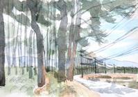 高原の防風林 - ryuuの手習い