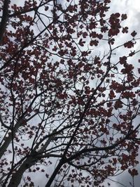 4/7 お庭 - Jcotton日記