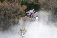 #DP3m  大阪の桜が散る頃に山の桜は見頃を迎える #勝尾寺 #桜 - 関西ウォーカー自遊人 Trial