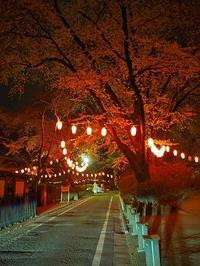 桜の開花は何時になるでしょうか? - 浦佐地域づくり協議会のブログ