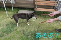 あまのじゃく - HAMAsumi-Life