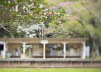 小湊鉄道〜初めての乗り鉄⓶ - ほほえみ