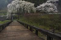花散らしの雨 - 撮ろ 撮り 撮る 撮れ 撮れば ruchanのフォト遊び