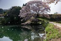 桜吹雪 - 撃沈 Photo Diary