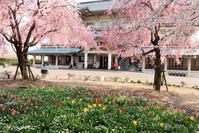 びわ湖大津館の春 - 「古都」大津 湖国から