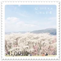 ☆桜の便り☆ - 長野県松本市 カルトナージュ教室  Atelier ☆ la blanche table